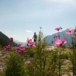 Chamonix flowers