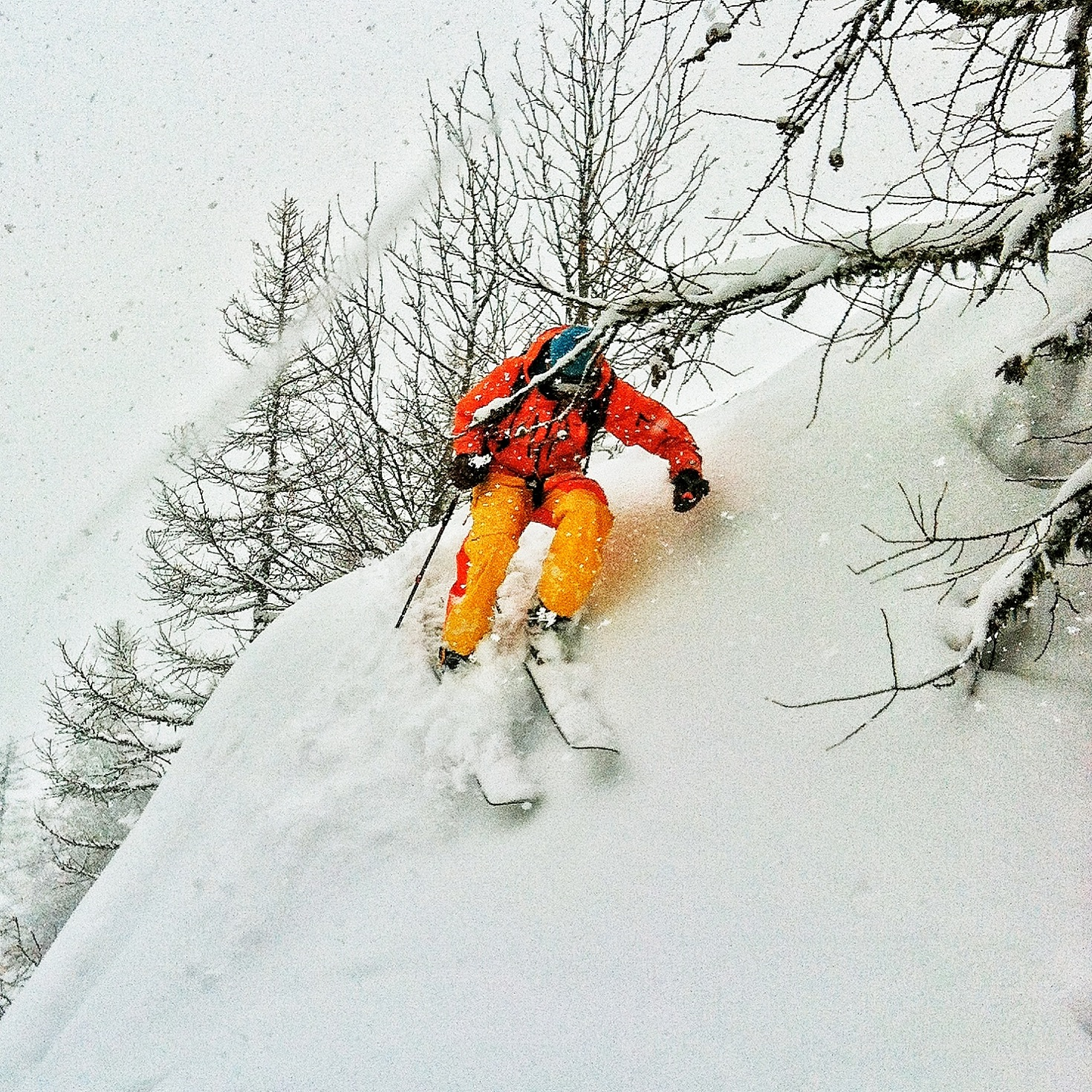 In the trees at Grands Montets