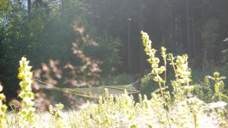 Hammock in the meadow