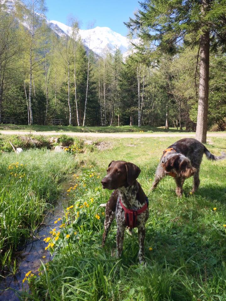 Rosa the GSP and Daphne by a valley floor stream