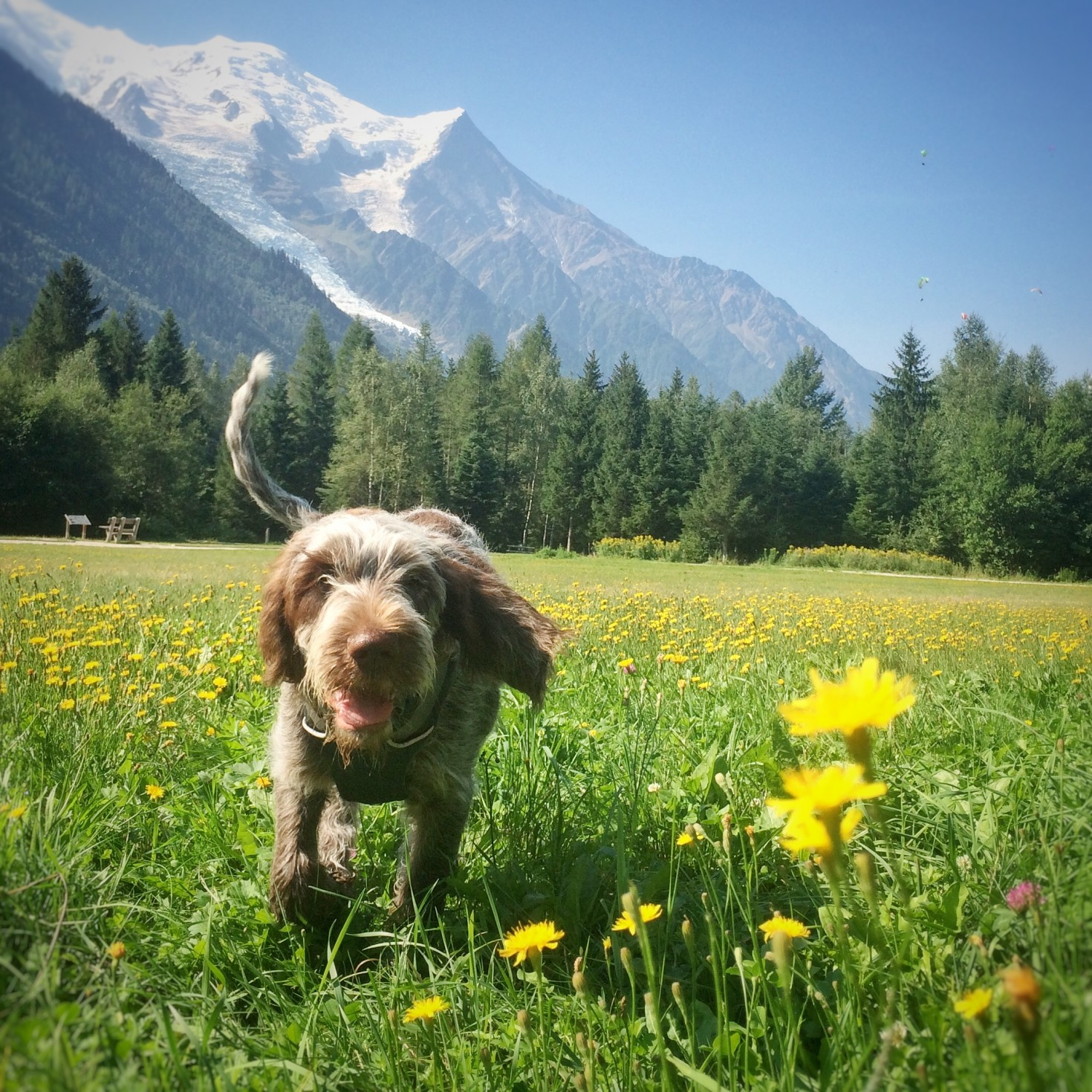 puppy in the flowers