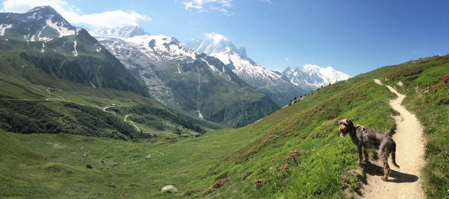 Panarama at Le Tour